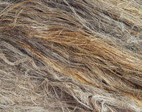 Flax fibers Stock Photography