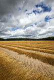 Flax field . autumn Royalty Free Stock Image