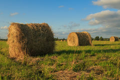 Flax field Royalty Free Stock Photos