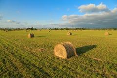 Flax field Stock Photos
