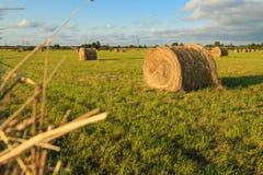 Flax field Royalty Free Stock Photo