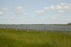 Flax field in Saskatchewan, Canada. Flax field in the canadian prairies of Saskatchewan in Canada Stock Photo