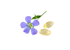 Flax Flower and capsules Royalty Free Stock Images