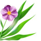 Flax Flower with green leaf isolated Stock Photos