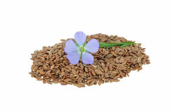 Flax Flower and seeds Stock Image