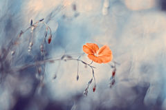 Flax flowers on a beautiful background. Artistic picture with beautiful tonality. Selective focus Stock Images