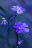 Flax flowers Stock Photos