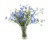 Flax flowers isolated Royalty Free Stock Images