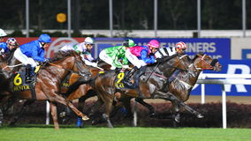 Flax leading the race at Singapore Airlines International Cup Stock Photography
