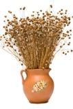 Flax (Linum usitatissimum) Stock Photography