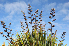 Flax reaching high Royalty Free Stock Image