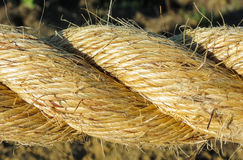 Flax Rpe Stock Image