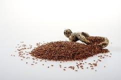 Flax-seed με ένα κομμάτι ξύλινου κουτάλι-όπως στοκ εικόνες