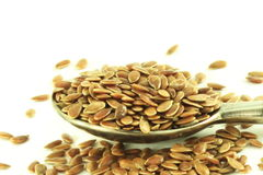 Flax seed closeup in white background Stock Images