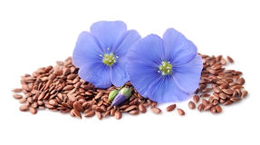 Flax seed and flax flowers . Flax seed and flax flowers closeup on white backgrounds Royalty Free Stock Photo