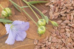 Flax Seeds and Flower - Linum usitatissimum royalty free stock images