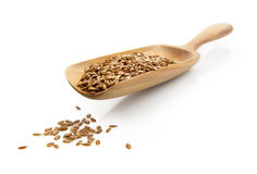 Flax seed Royalty Free Stock Photo