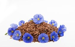 Flax seeds with flax flower isolated Royalty Free Stock Photography