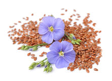 Flax seeds with flowers Royalty Free Stock Photo