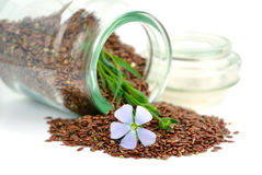 Flax seeds and flowers. Stock Images