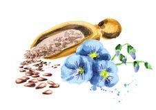 Flax seeds vector illustration