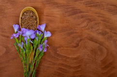 Flax seeds in vintage spoon with linum plants and lin flower on Royalty Free Stock Image