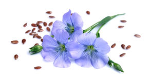 Free Flax Seeds With Flowers Stock Image - 72017151