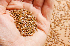 Flax seeds in your hand Royalty Free Stock Photography