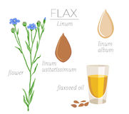 Flax Royalty Free Stock Photography