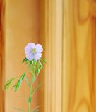 Flax twig with flowers on wood blurred  background Royalty Free Stock Image