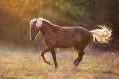 Flaxen paardsilhouet bij zonsondergang stock afbeeldingen