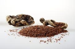 Flaxseed com algumas partes de madeira Imagem de Stock