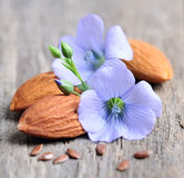 Flaxseed flowers  and almonds Stock Images