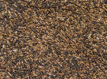 Flaxseed texture Royalty Free Stock Photo