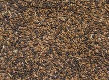 Flaxseed texture Royalty Free Stock Photo