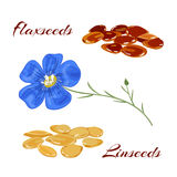 Flaxseeds and blue flax flower. Royalty Free Stock Photography