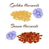 Flaxseeds i purpurowy lna kwiat Fotografia Stock