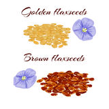 Flaxseeds and purple flax flower. Stock Photography