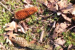 Flay lay display of pine cones and fallen leaves royalty free stock photography