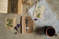 Flay lay, top view of the herbarium, dried lavender flowers, notebook, book for notes, pen and spring summer pictures on a concret royalty free stock photography