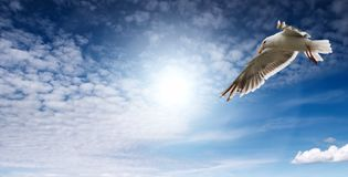 Flaying seagull. Blue sky and flaying seagull Stock Photography