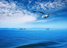 Flaying seagull. Blue sky, ocean and flaying seagull Royalty Free Stock Photography