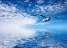 Flaying seagull. Blue sky and flaying seagull Royalty Free Stock Photo