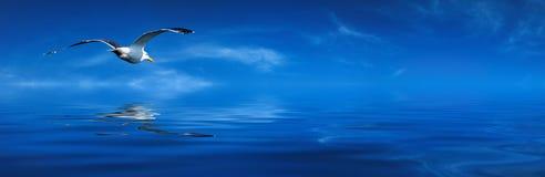 Flaying seagull Stock Photo