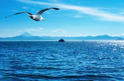 Flaying seagull. Blue sky, ocean and flaying seagull Royalty Free Stock Images