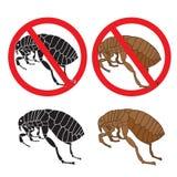 Flea. Danger sign. Flea and hygiene. Stock flea. Picture a flea. Stock Photos