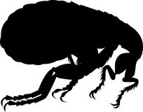 Flea insect silhouette Stock Images