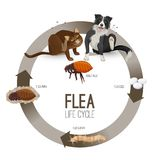 Flea life cycle circle with headlines vector illustration. Flea life cycle circle vector. Pets with harmful parasites suffering from it. Dog and cat scratching stock illustration