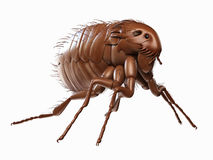A flea Royalty Free Stock Images