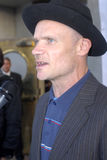 Flea on the red carpet. Royalty Free Stock Photography